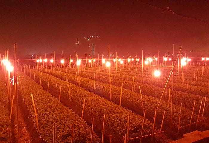 Ánh sáng đơn sắc giúp đỡ người nông dân rất nhiều trong việc phát triển cây trồng - 1
